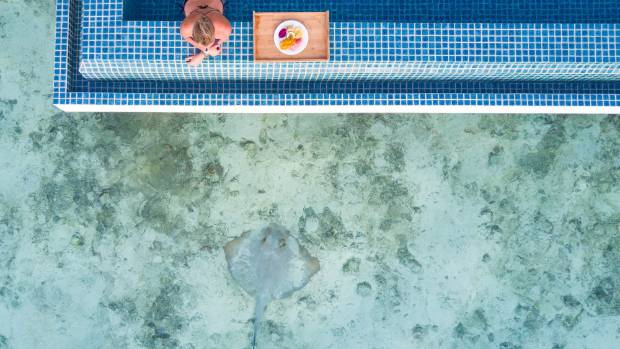 A stingray searches for food just below our lap pool.