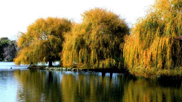 Willows at Western Springs.