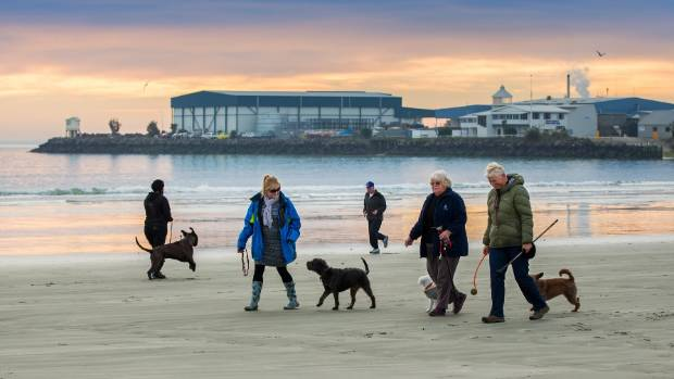 Dog-walkers in winter at Caroline Bay. The Timaru District Council's dog control bylaw - which state dogs cannot be ...