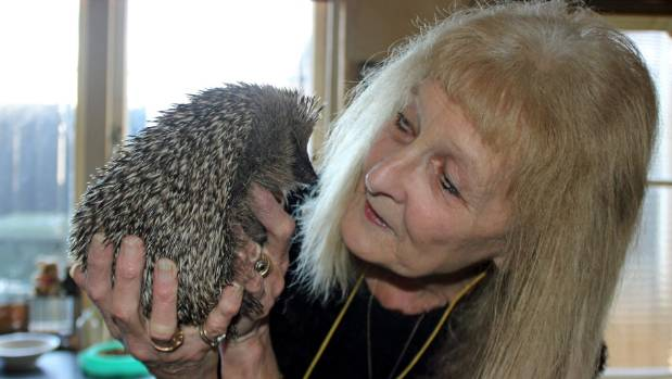 Monique Jones has nursed Ringo the hedgehog back to health in her Royal Oak home.