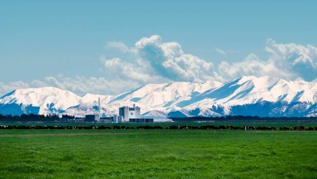 Synlait's infant formula plant, Rakaia. Its 200 suppliers are drawn from the surrounding region.
