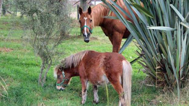 """Brenda Ward """"Oruanui Valley"""" property offers freedom campers using Campable.com a chance to chat with horses on the ..."""