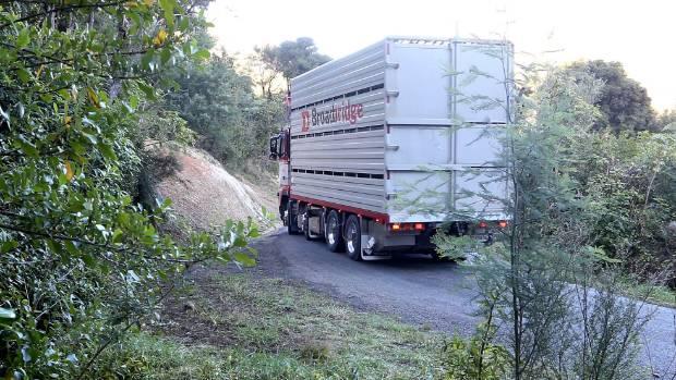 A stock truck passes through on Kenepuru Rd.
