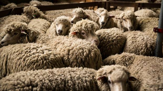 Strong wool returns continue to be dismal for the country's sheep farmers.