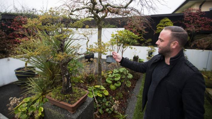 Priceless bonsai trees stolen from Christchurch collector ...