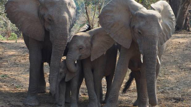 An elephant family comes down to the river to drink, so our morning coffee is cut short.