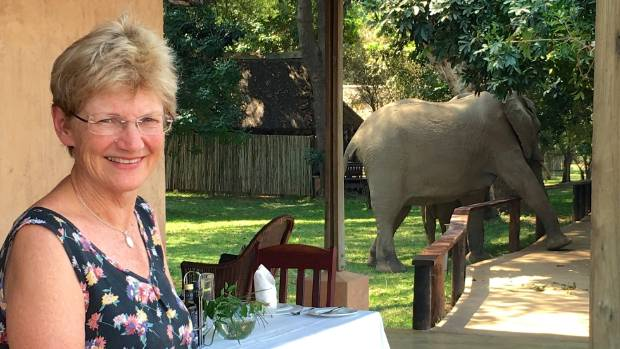 Getting up close to the wildlife doesn't just happen on a Royal Zambezi safari
