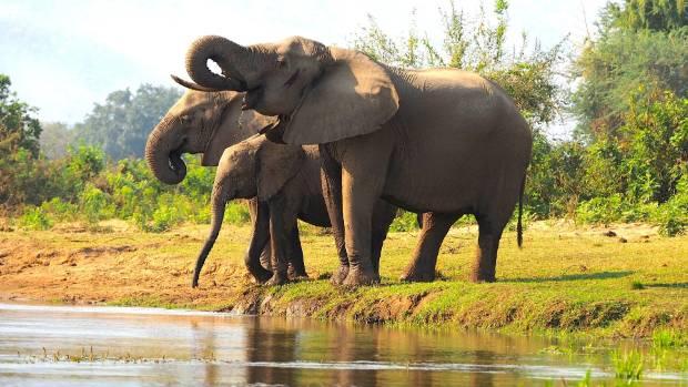 Elephants look even bigger, seen from a canoe.