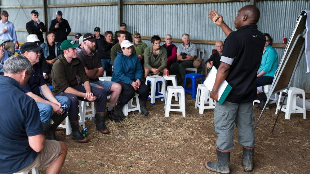 how to become a dairy farmer in nz