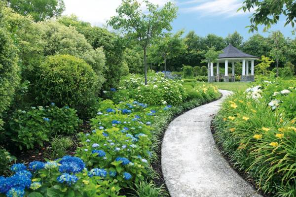 The hydrangea walk, edged with yellow day lilies and low-growing mondo grass, curves towards the gazebo.