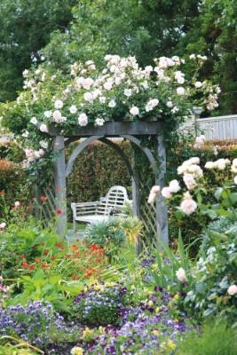 The rose 'New Dawn' climbs a wooden archway. The neatly clipped hedge behind is Eugenia ventenatii.