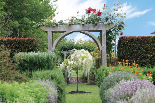 Rosa 'Climbing etoile de Hollande' clambers over an archway that leads through  to the secret garden where a standard ...