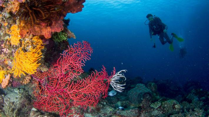 Lonely Planet S Bali Island Of The Gods Stuff Co Nz