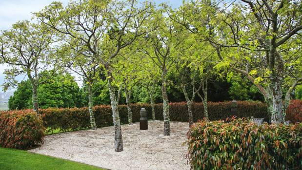 A grid of Melia azedarach trees at the southern end of the house is surrounded  by a clipped hedge of Camellia 'Ariel's ...