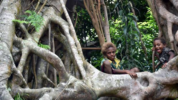 Children in Vanuatu play in the branches of a village banyan tree.