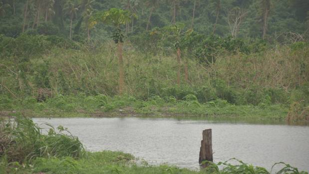What was previously workable land is now underwater. Crops of papaya and cassava are now struggling to grow in the ...
