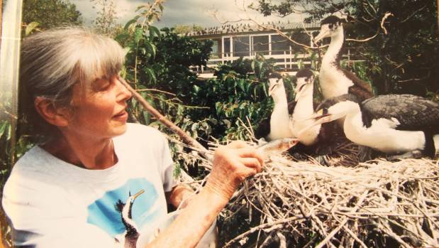 For more than 30 years Pam Howlett fed and nursed Panmure Basin's colony of pied shags.