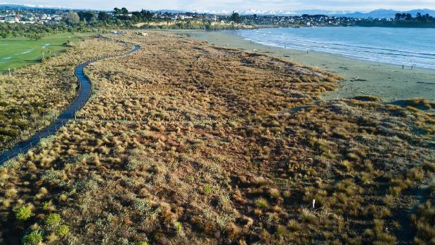 Thanks to sand-attracting plants, the dunes an Caroline Bay, in Timaru,  are growing up and expanding towards the sea.