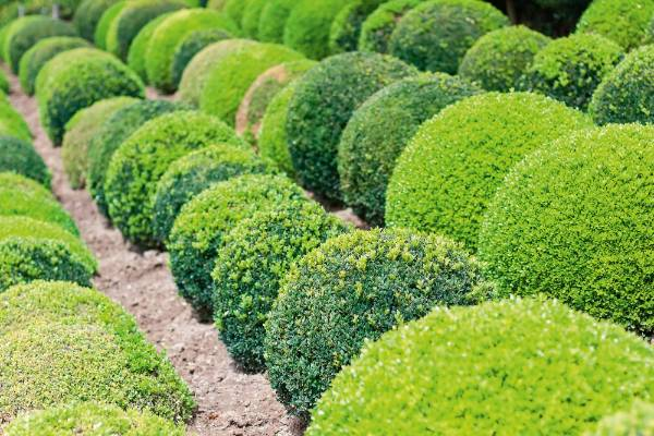 5. Topiary: the beauty of topiary is that it can be almost any shape or size  you like, though arguably the simpler ...