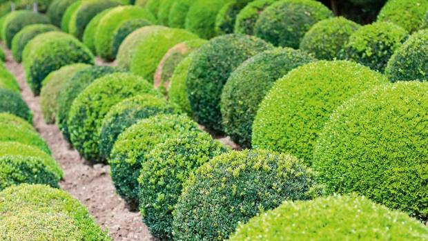 The beauty of topiary is that it can be almost any shape or size you like.