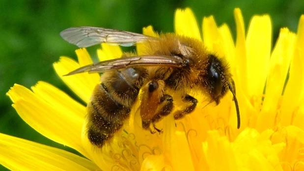 Spring is a great time to plant bee-friendly flowers at your place.