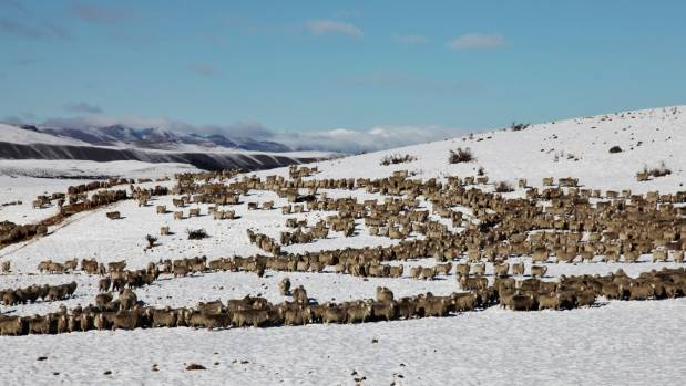 Snow settled in South Canterbury earlier this week.