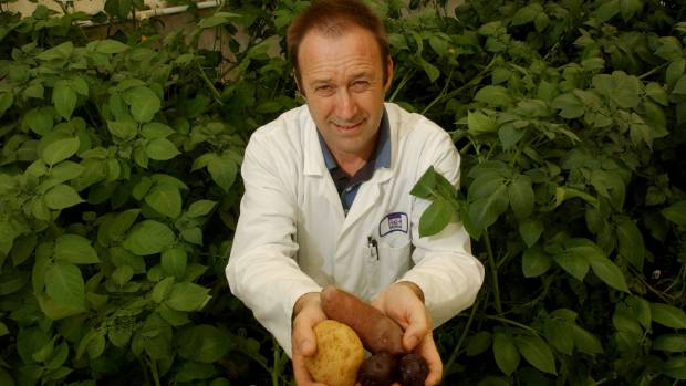 In the 2000s, Dr Tony Conner from Plant and Food Research at Lincoln University developed GM potatoes with increased ...