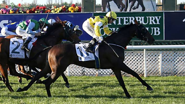 Outgoing Ashburton trainer Jan Hay hits out at handicapping