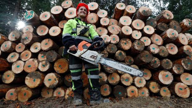 Women are making the cut in forestry | Stuff co nz