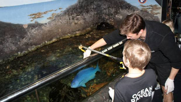 Ayden helped to feed the sharks and other tropical fishes.