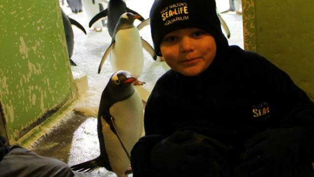 Ayden Young got to hang out with penguins when he was an ocean ranger for a day at Kelly Tarlton's.
