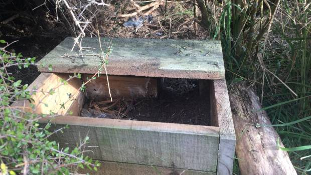 One of the nesting boxes volunteers made for penguins.