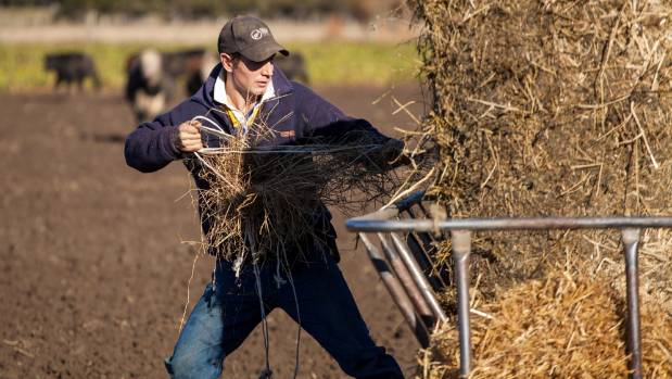 John Harrison is always looking for a challenge and believes in feeding his stock well to get top production.