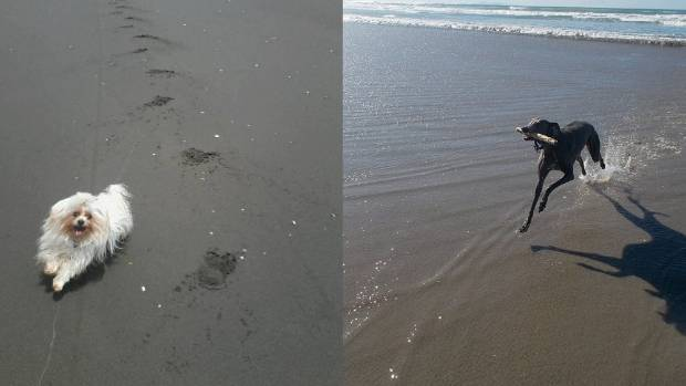 Sand sprints: Romeo (left) and Jake are as happy as they can be. Not really relaxed, but I liked the photos so here they are!