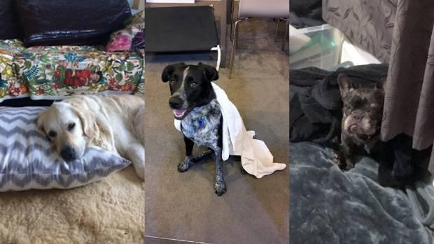 Low-key leisure: Laurel (left), Pepper and Petunia.
