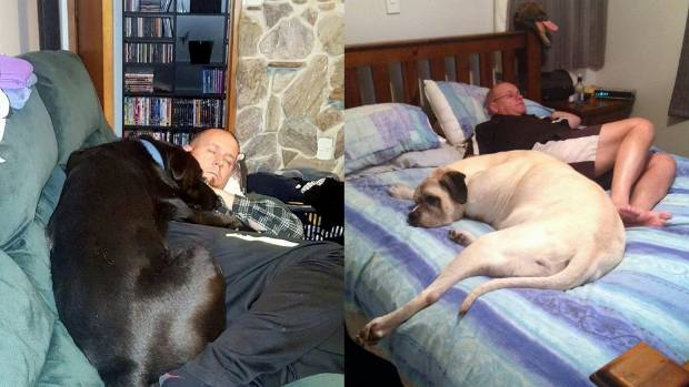 Finally, two big hounds sharing quality time with their dads: Zara (left) and Jake. Just because you've grown into a ...