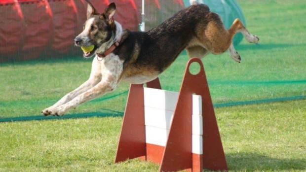 Keara winning a flygility race.