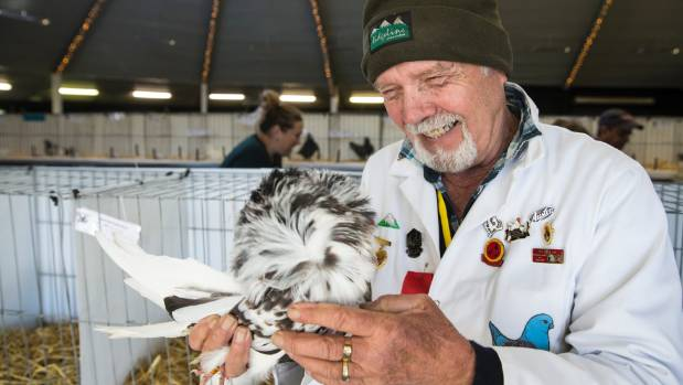 Waikato Poultry & Pigeon Club  is holding its 115th annual championship show at Hamilton Gardens over the weekend. Judge ...