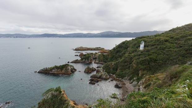 Matiu/Somes Island's south coast.