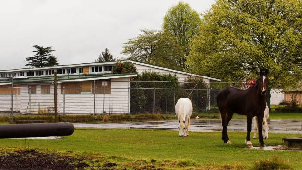 Horses nibble at the fields where children once played at Tokoroa East School.