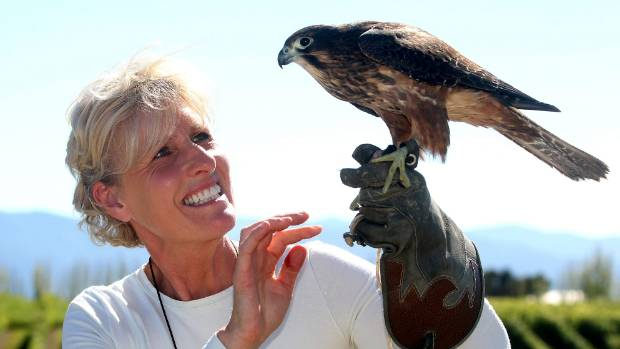Marlborough Falcon Trust aviary manager Diana Dobson is appealing for more food to help get the birds ready for parenthood.