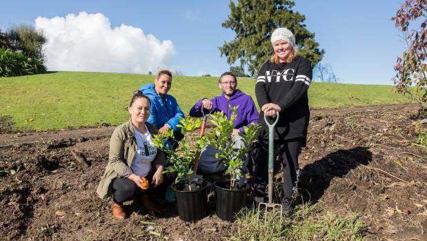 Inviting people to a community orchard planting in south Auckland are, from left, Healthy Families Manukau and ...