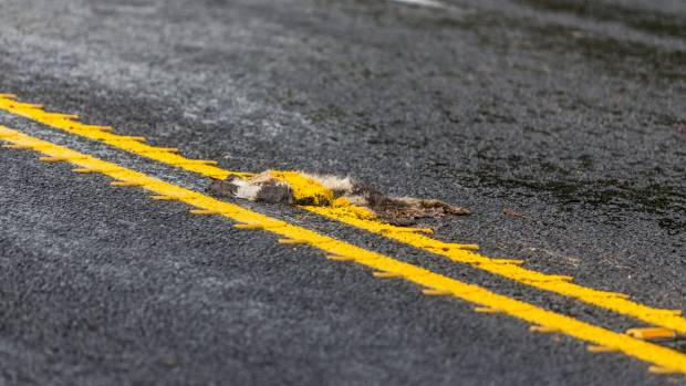An animal killed on SH3 south of New Plymouth received a fresh coat of yellow paint from road markers.