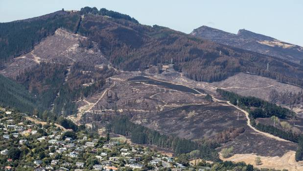 The fire extensively damaged the grounds of the Christchurch Adventure Park, pictured.