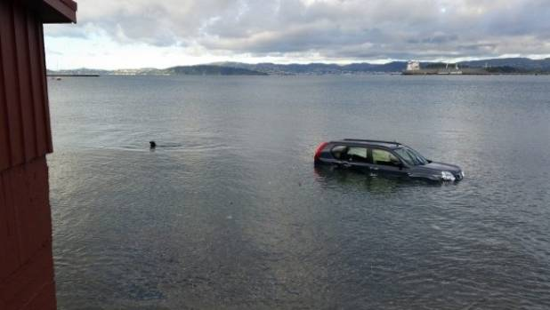 A lone seal bobs around near a submerged vehicle at Lowry Bay in November, 2016 near the recent crash (File photo).
