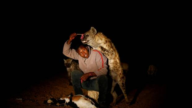 To encourage visitors to trust the hyenas, Abbas feeds them directly from his mouth.