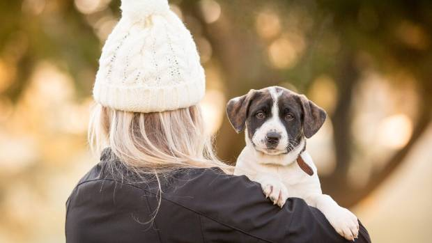 Over the shoulder shots are a good way to keep puppies still for photos, Kelly Wolfe says.