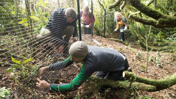 The fence keeping weka out of the sooth shearwater colony was installed in May. (File photo)
