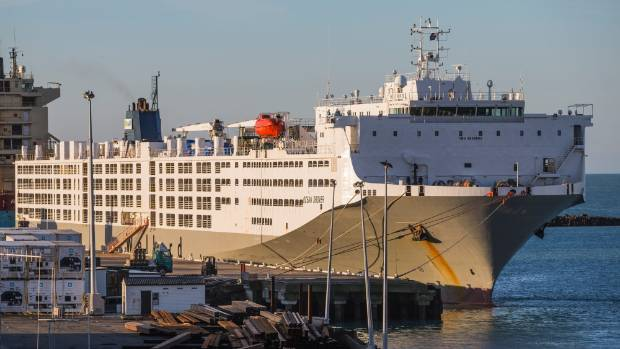 The Ocean Drover docked at PrimePort Timaru on Tuesday afternoon, ready to transport 6600 dairy cows to China.