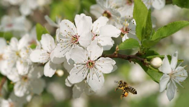 Attract pollinators to your fruit trees by planting flowers nearby.
